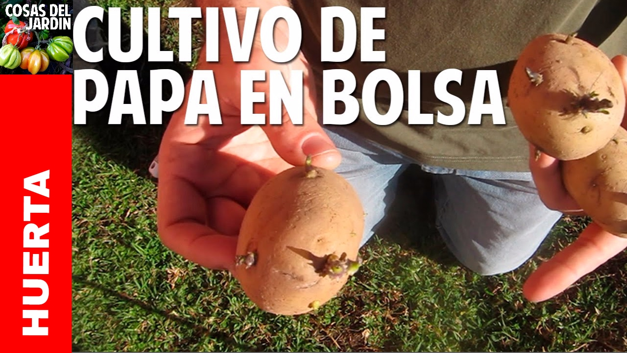 Como cultivar papa en el balc n parte 1 pr ctico y for Como cultivar patatas