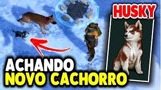 ACHANDO Novo Cachorro HUSKY - Last Day On Earth