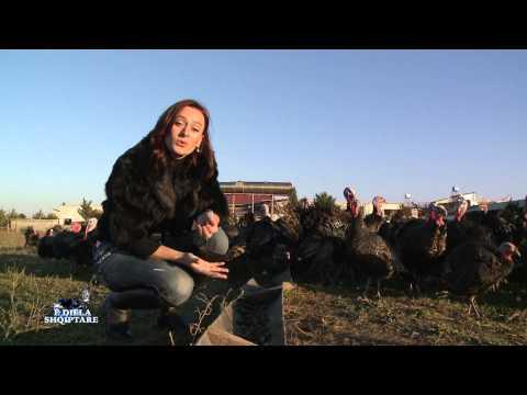 E diela shqiptare - GJELI I DETIT, 23 dhjetor 2012
