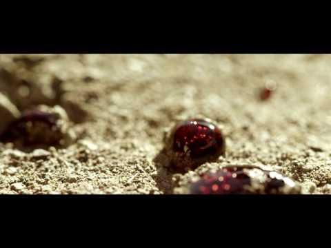 Teaser 2  || Jagveld
