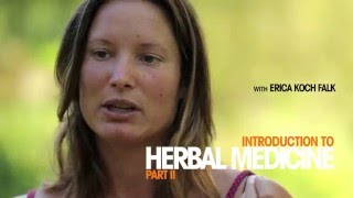 Introduction to Herbal Medicine - A Permaculture Skills Excerpt