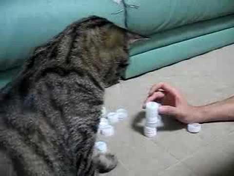 Кот и крышечки (улыбнуло)