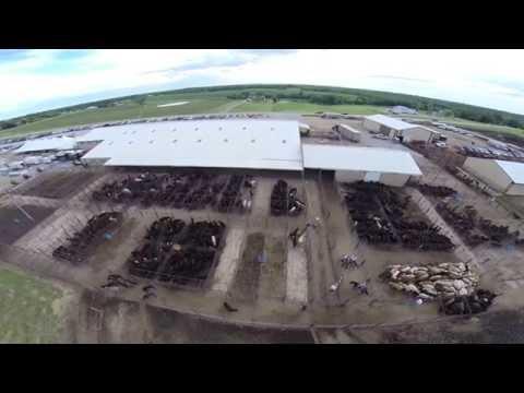 World Livestock Auction Championship 2014-Knoxville, Iowa
