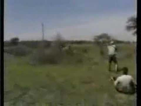 Lion attack hunting safari Africa