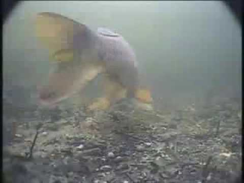 Korda State Of The Art Underwater Carp Fishing Part 1.mp4