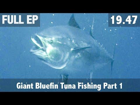 ULTIMATE FISHING - Giant Bluefin tuna fishing Part 1