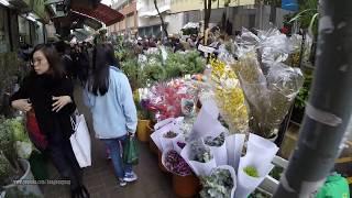Hong Kong Chinese Lunar New Year Pre-Walk 2018 @ Mong Kok Flower Market 太子花墟 (2018-Feb-14)