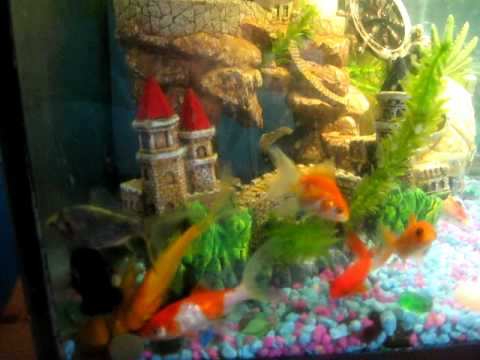 cool goldfish tank. Our Goldfish tank, after we