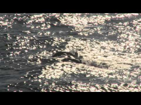 Gulf of Mexico oil spill disaster deep sea coral Video News Release.mov