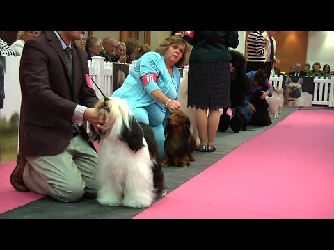Around the Dog World - Eukanuba Champion Stakes 2013 & Blooper Reel (Ep 25)