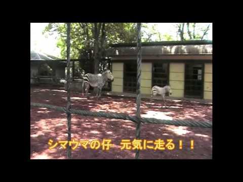 sawacon 夢見の動物たち vol 2