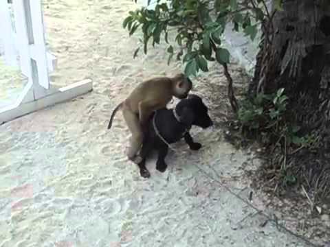 Chú khỉ cuồng bấn :))