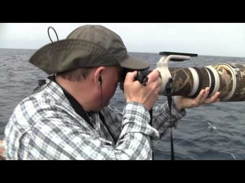 Grande Pelagic San Diego Flesh-footed Shearwater 14 May 2011