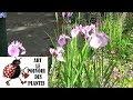 Tuto Jardin Suivi D Un Massif De Vivaces Au Fil Des Saisons 02 Photos Du Massif 02 ET 01 A La Fin mp3