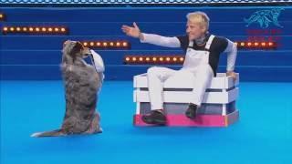 FCI Dog dance World Championship 2016 –Heelwork to music final– Mari Muhonen and Indi (Finland)