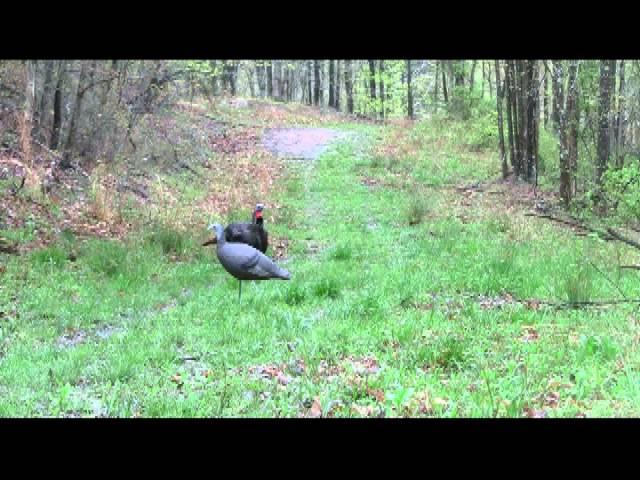 2013 spring turkey hunt