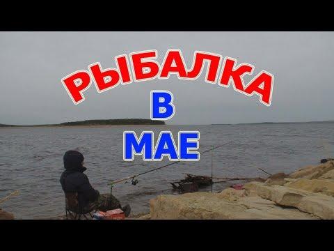 Сорога оборзела, ломает крючки  Утренняя рыбалка в Мае на фидер, промеряем дно речки Ия