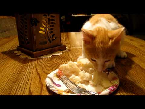 Kittens Birthday Cake Kitten Eating Cake 2 Youtube