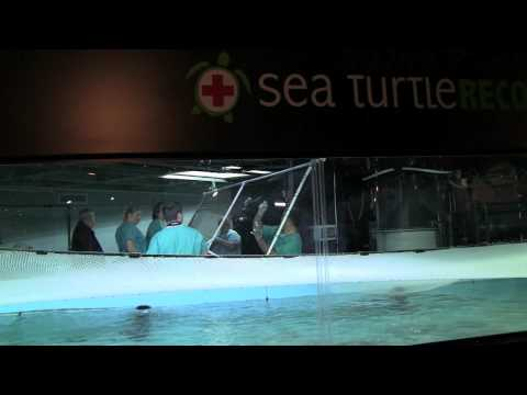 Acadia: The first rescued sea turtle of the 2009 season