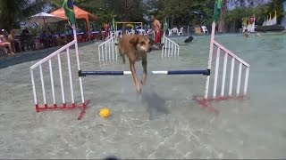 Watch Four-Legged Athletes Compete In First Ever Rio Olympic Dog Games