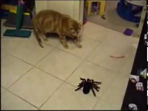 Spider vs  Mr. Bill