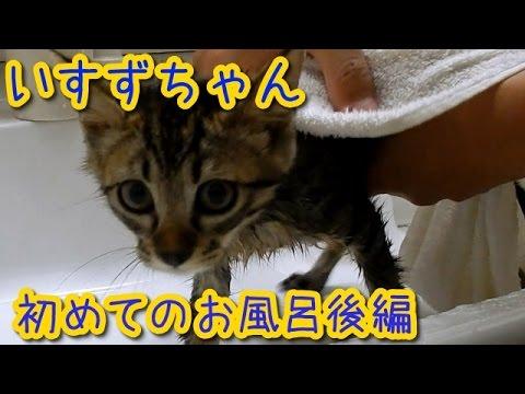 猫【かわいい子猫】いすずちゃん初めてのお風呂後編