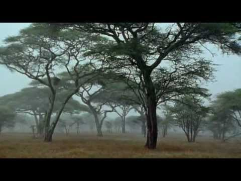 BBC Wild Africa - Episode 2 - Savannah
