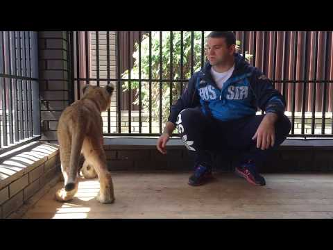 ТИГР И АЛАБАЙ | TIGER VS CENTRAL ASIAN SHEPHERD DOG