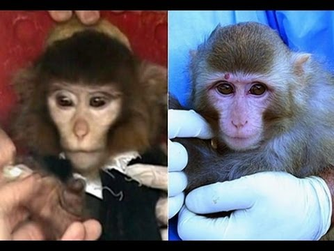 Monkey Business - Was Iran's Space Launch Fake?