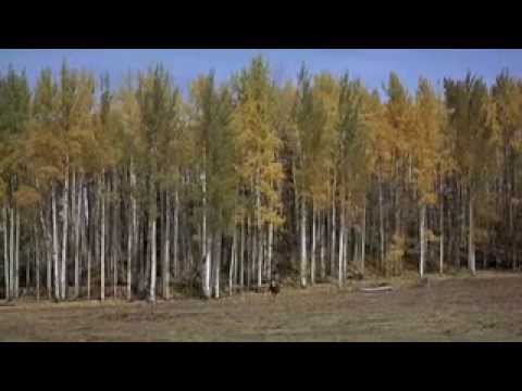John Wayne in True Grit, Then and Now, Extended Video