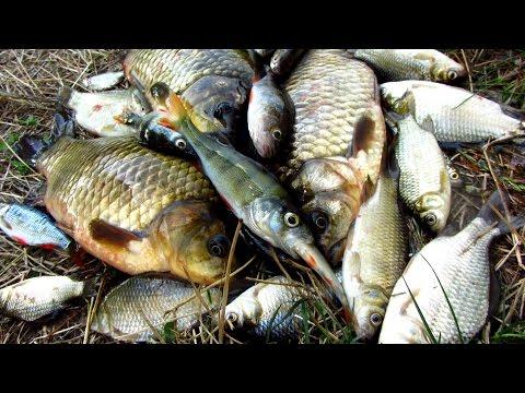 Рыбалка, шашлык, уха в котелке, рыба на гриле