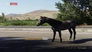 Başıboş at polis memurlarına zor anlar yaşattı