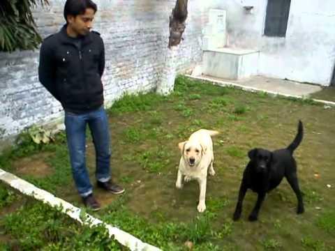 Dog House Price In Delhi