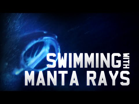 Swimming With Manta Rays video