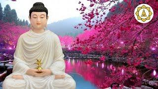 Đêm Trằn Trọc khó ngủ''Hãy để Phật Kể Chuyện Đêm Khuya''Tên Cướp Có Một Chiếc Giường Bằng Vàng