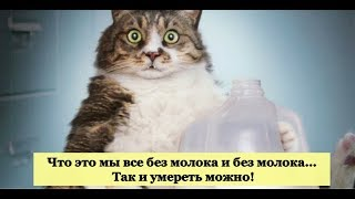 КИСКИ С МОЛОКОМ. Почему кошки любят молоко? Подборка 2019.