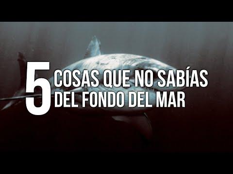 5 COSAS QUE NO SABÍAS DEL FONDO DEL MAR