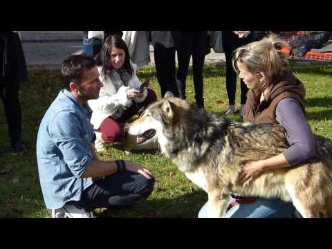 CRAIG PARKER PHOTO WITH WOLF