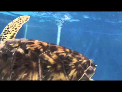 Underwater Sea Turtles