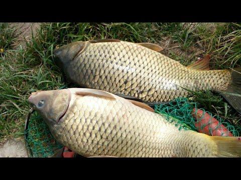 Рыбалка Бешеный Клев Трешь на три удочки одновременно#2