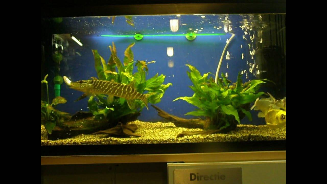 Щука аквариум