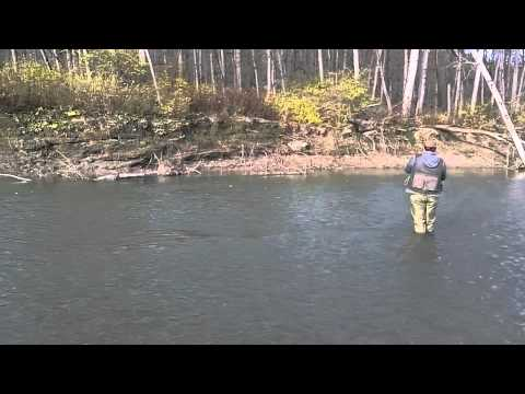 Cattaraugus creek steelhead fishing youtube for Cattaraugus creek fishing report