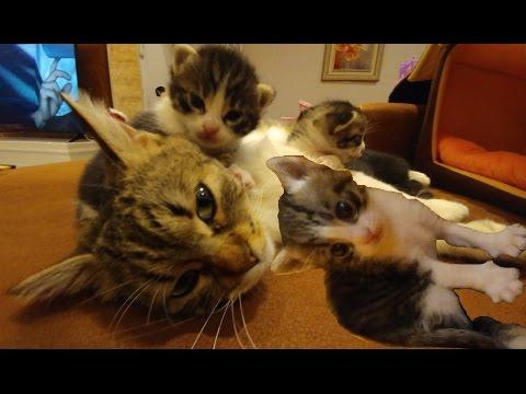 Kedicik Alina ve Minişler