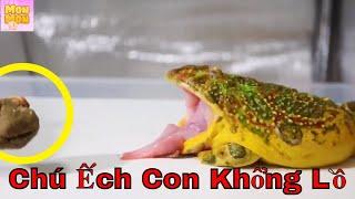 Chú Ếch Con + Con Heo Đất + Chú Voi Con Ở Bản Đôn | Nhạc Thiếu Nhi Remix