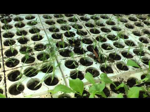 come preparare l'orto-la stanza dei germogli.MP4