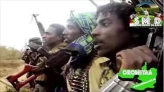 Ibroo Ibsaa oromo music new today 2016
