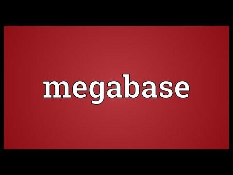 Header of Megabase