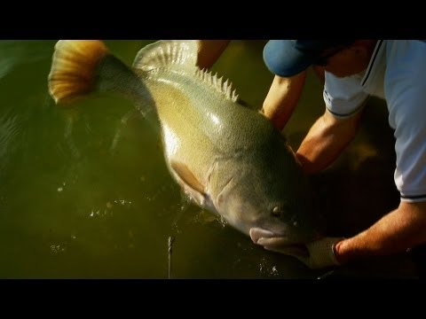 Fishing Australia 2012 Murray Cod Ep4