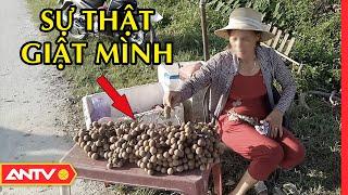 Sự thật GIẬT MÌNH về NHÃN LỒNG HƯNG YÊN đang bày bán tràn lan ngoài chợ | TPSHB | ANTV