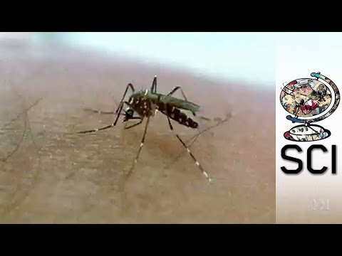 Stopping The Spread Of Deadly Dengue Fever